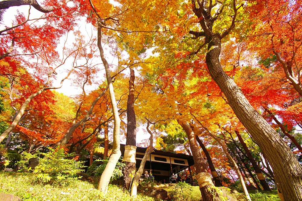 Tokyo's Tonogayato Gardens was originally part of a vacation home built in the 1910s. Designated as one of Japan's Places of Scenic Beauty, the idyllic #garden features Western and Japanese styles with a lush #bamboo forest and a #picturesque Japanese #teahouse