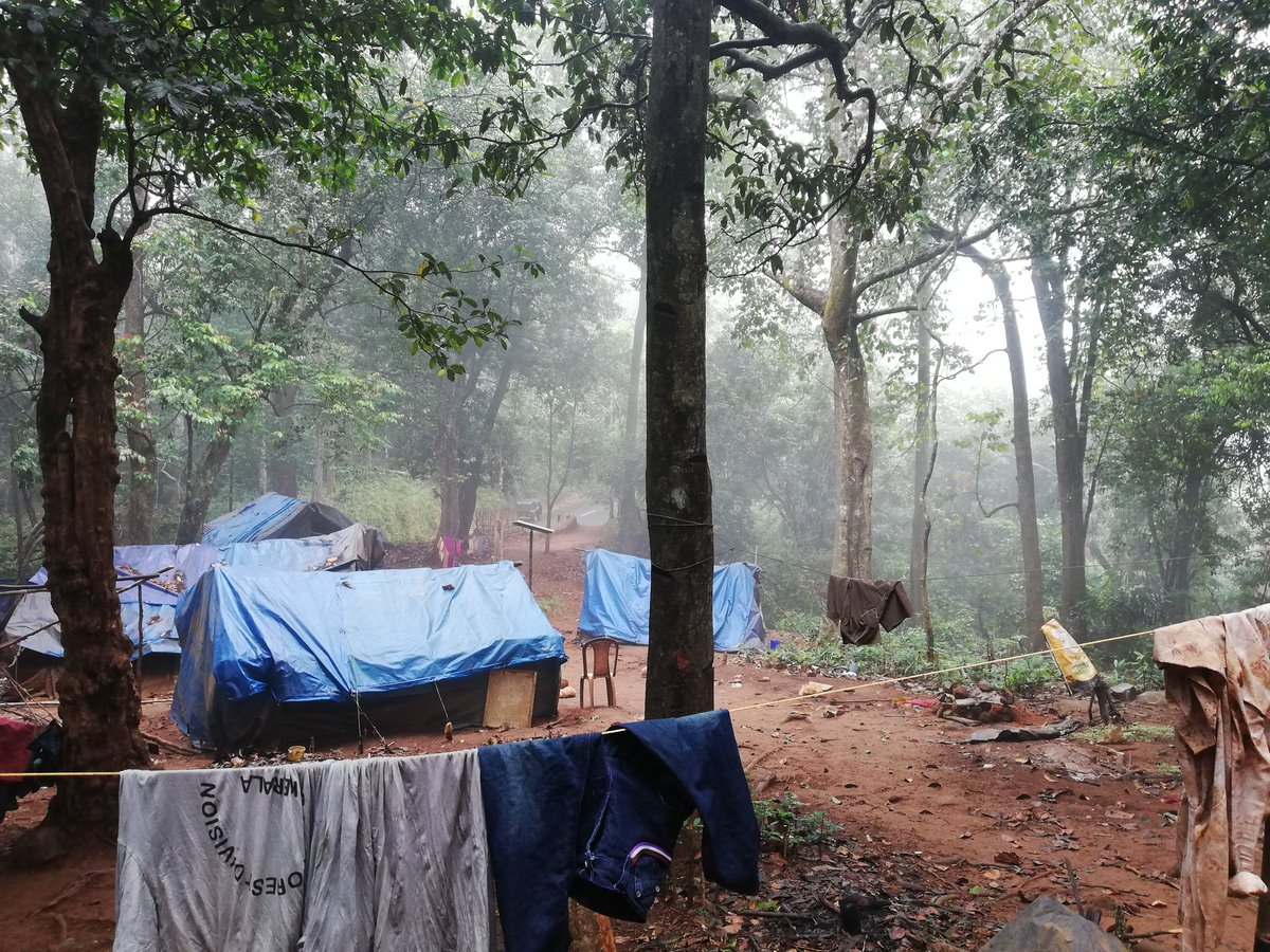 Our team visited tribal village of sabarimala forest to develop products for processing acacia lntsia, a creeping plant the bark of, which is used as a natural cleanser. #innovation #idea #startup #technology #entrepreneurship #kerala #india #sabarimala #forest #tribal #organic https://t.co/AgoxDG8t2d