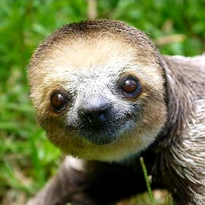 """Mom? I want a raccoon for Christmas!""  ""No, we already have a raccoon at home""  Raccoon at home:  #ThursdayMorning #ThursdayThoughts #Christmas2020"