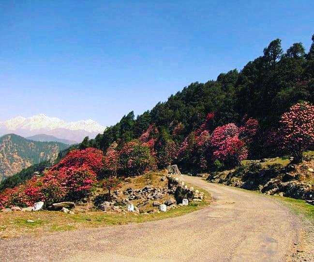 @rameshpandeyifs @Saket_Badola @neeleshmisra When you have lived with the mountains..you belong to them. There is no escape. @RealRuskinBond 😊 #mountains #himalayas #chopta #cannon #NaturePhotography @UTDBofficial @UttarakhandIFS @surenmehra @ParveenKaswan @paragenetics @DigvijayKhati @Saket_Badola