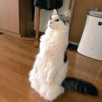 見知らぬ人を前にして硬直?!業者さんが作業を始めたのを見て固まっちゃう猫が可愛すぎる!
