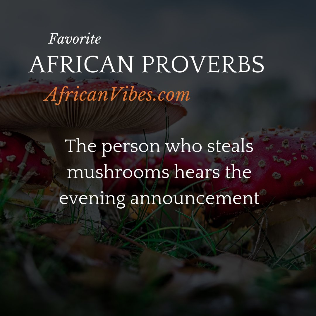 """What does this African proverb mean?  """"The person who steals mushrooms hears the evening announcement""""  #africanproverb #mushrooms #hearing #trumpet #Eastafrica #westafrica #northafrica #southafrica #nigeria #Africa #proverb #africanproverbs #Africanvibes #person #steals"""
