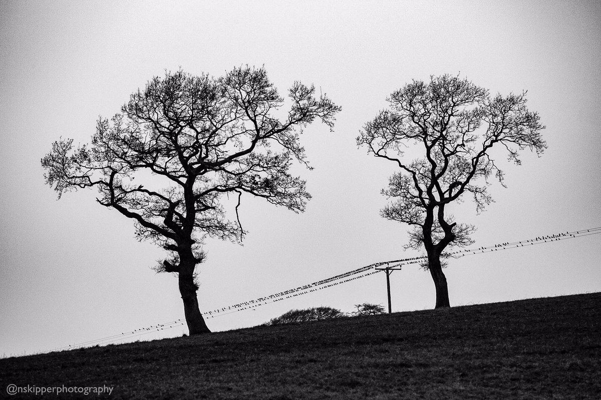 Birds on a wire in Middleton lkley. Day 338 of my 2020 366 photo project. #ilkley #wharfedale #yorkshire #landscape #365 #b&w #blackandwhite #birds #birdsonawire #starlings