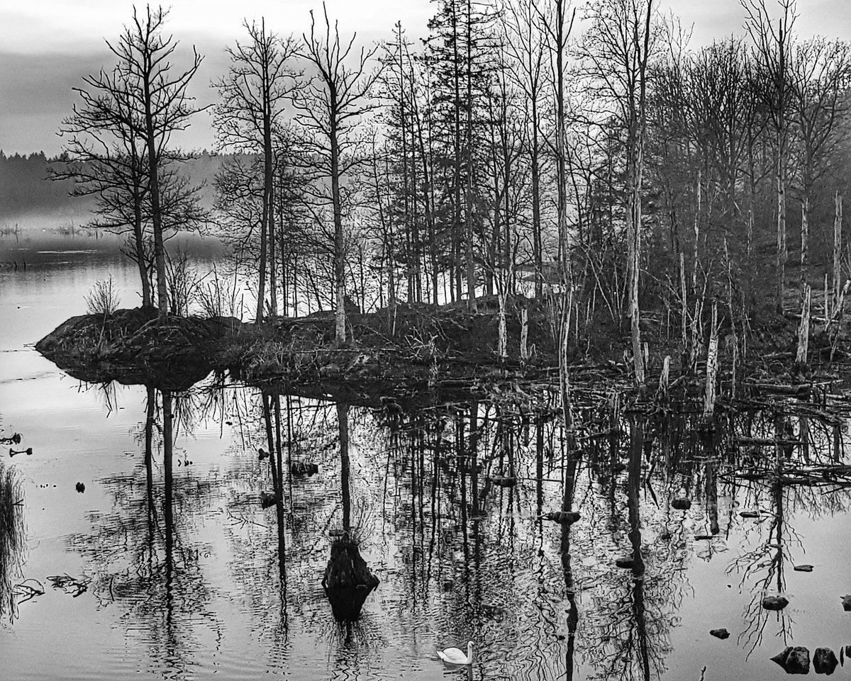 Swan Lake. #timmeutochtimmein #TheStory #ThePhotoHour #photography #photographer #photographers #PhotoOfTheDay #NaturePhotography #naturelovers #monochrome #blackandwhite #blackandwhitephotography #Sweden