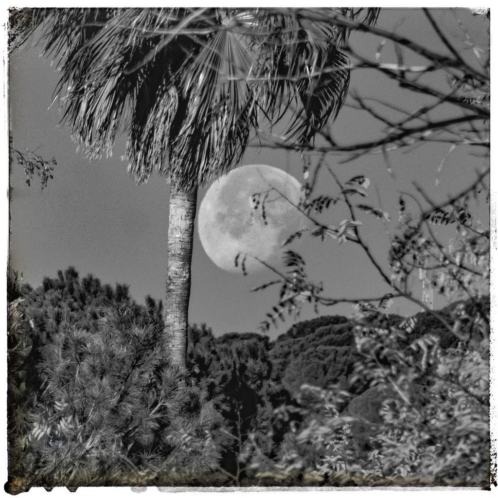 La luna esta mañana (Córdoba) #luna #lunallena  #fullmoon #blancoynegro  #blackandwhite  #blackandwhitephotography  #lumix  #lumixphotography  #naturaleza  #nature  #NaturePhotography