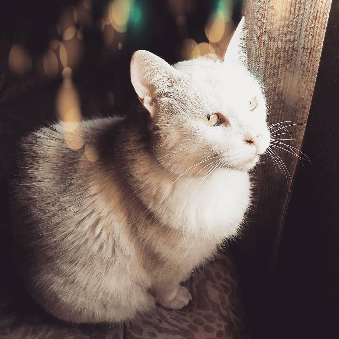 💛/// . . . #ilovemycat #pets #animales #love #cute #catoftheday #smile #kitty #animallover https://t.co/TLTajoCDDA