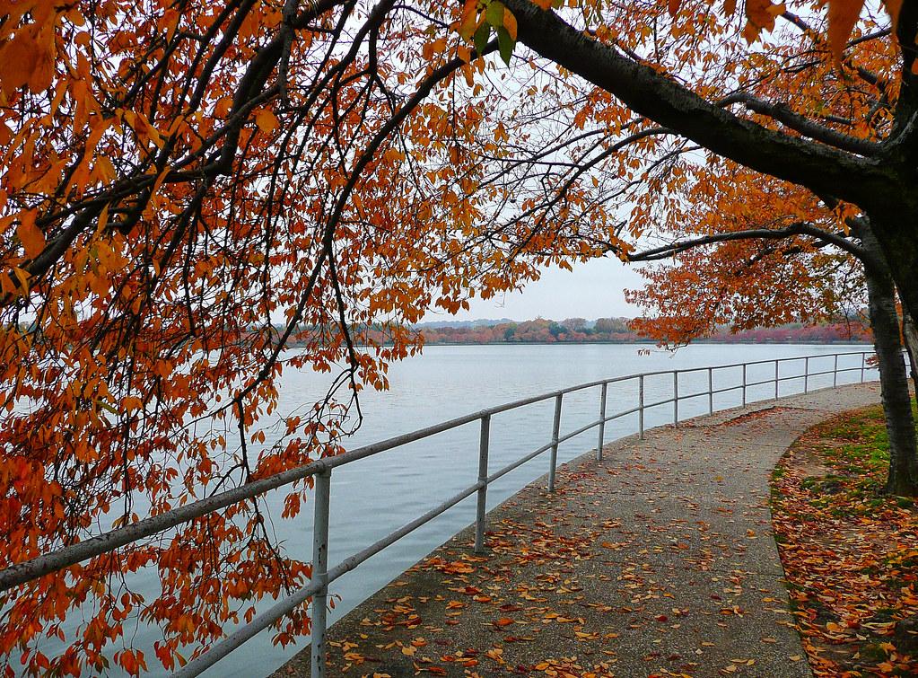Autumn Leaves in Washington, DC https://t.co/zfgG1iJRJZ #photography #travel #washingtondc #autumn #tidalbasin #lake #trees  #nature https://t.co/9PQoROl77N