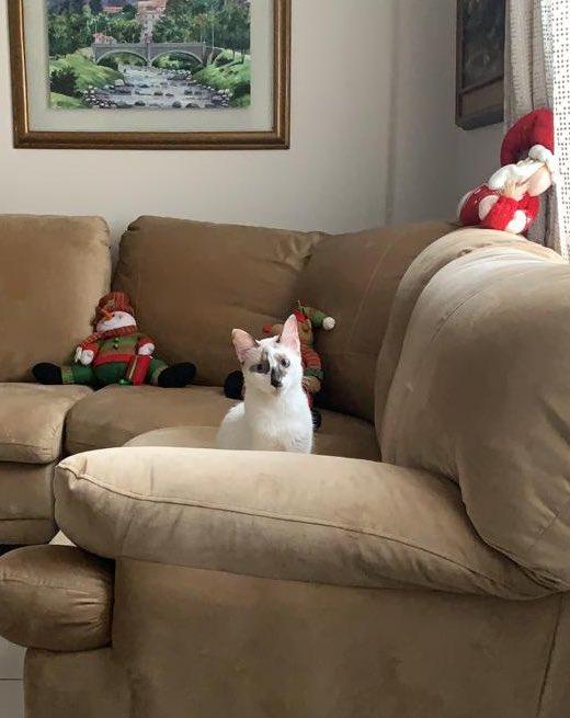 Mi gata se perdió en los Girasoles en Santa Cecília!!! Hagan RT para ver si aparece 😔 https://t.co/ILdyURYjw2