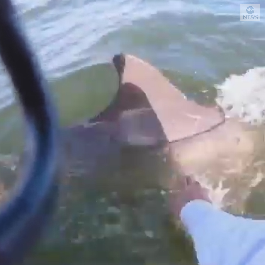 TO THE RESCUE: A dolphin that got tangled in rope off the coast of South Florida is swimming free again.