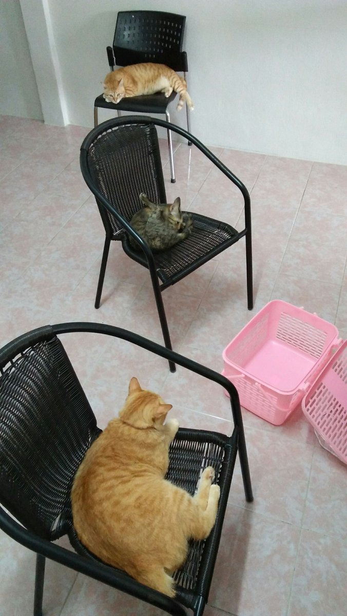 It's time for Cats to play musical chairs #Caturday,#CatsOfTwitter,#CatsOnTwitter,#catlovers,#sundayvibes