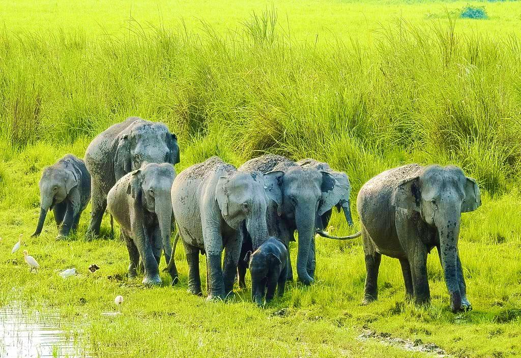 A Family outing @kaziranga_