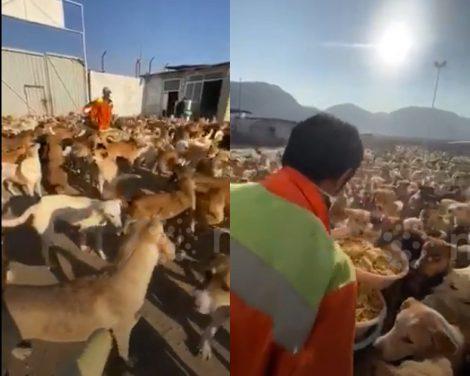 Iran, oltre 2mila cani nutriti al giorno dai volontari (VIDEO) - https://t.co/Qm1LToHJ7b #blogsicilia #iran