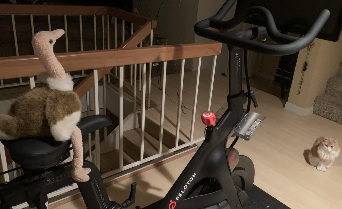 @NBCSports Oh my gosh cycling & an ostrich!!! Two of my favorites!!! #fridaymorning Ostrich photo shoot (with #smalltalk @onepeloton and Pretty the baby kitty cameos)