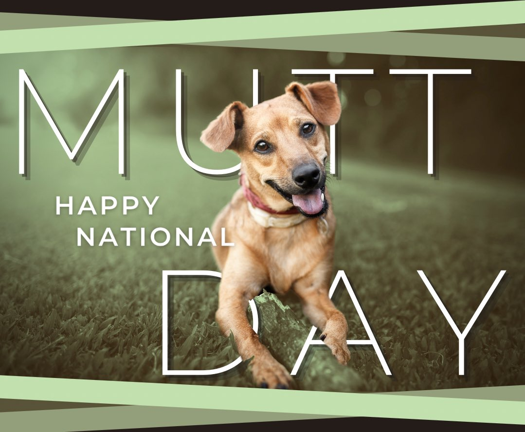Proud of this one, @canva. Thanks! Created earlier this week for #nationalmuttday. 🐶