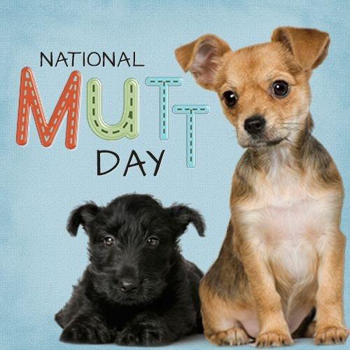 #NationalMuttDay #dogs #mixbreeddogs #loveanimals #crazinessoverload #CutenessOverload #animals