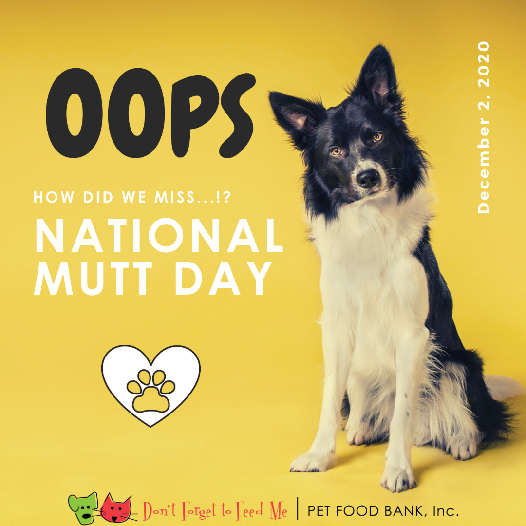 Oops. 👀 We missed #nationalmuttday retweet if you love your #mutt 🐕 ••• #dogsoftwitter #doglover #mutts #dogs