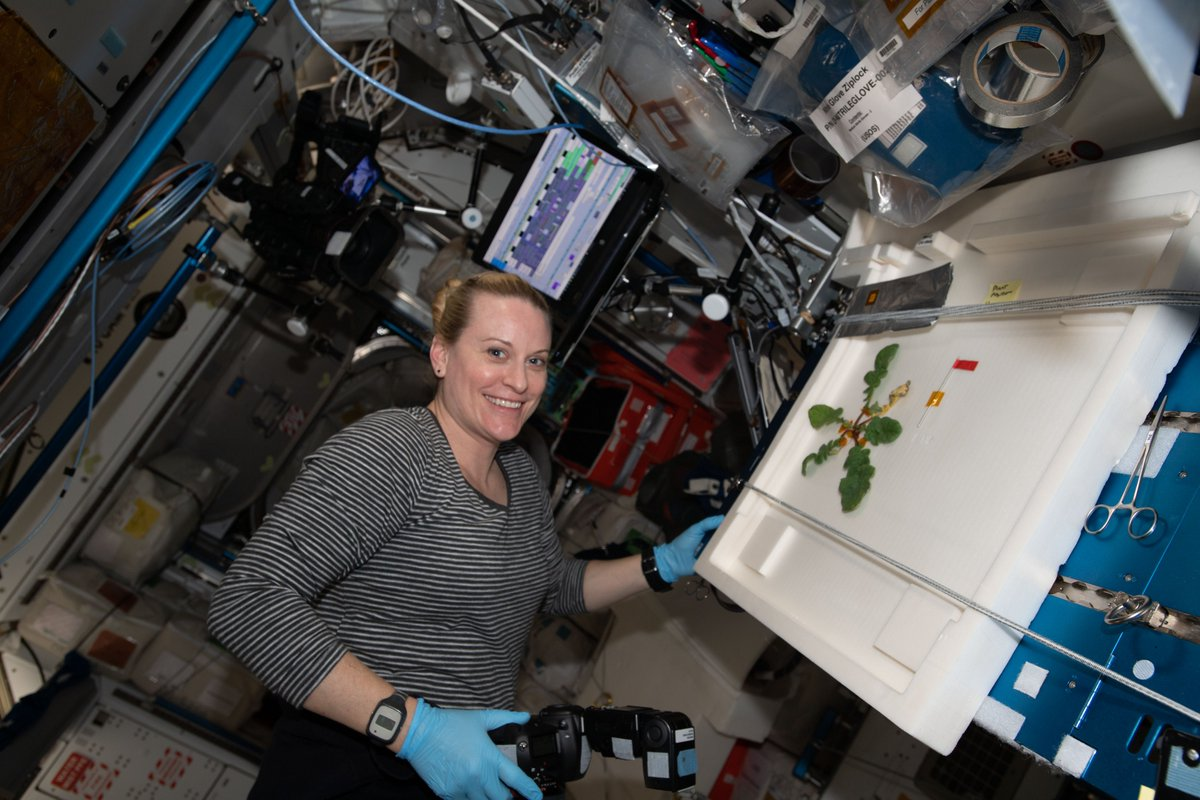 ISS Research (@ISS_Research)   Twitter