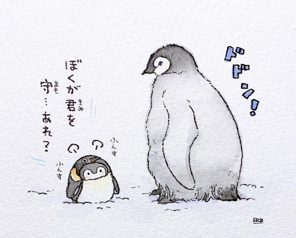 アドベンチャーワールドさんのコウテイペンギンの赤ちゃん、すくすくと成長中…!🐧