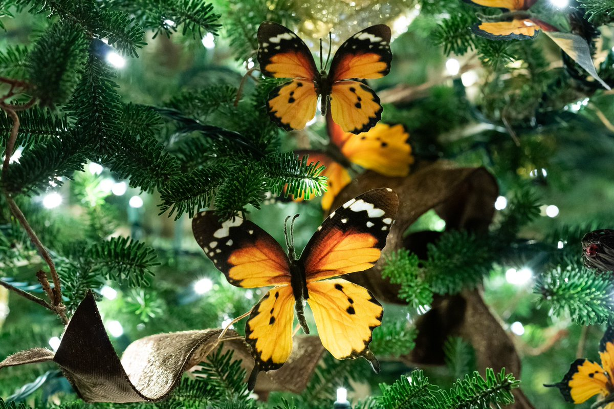 The @WhiteHouse Green Room showcases the diversity of creatures that call our country home. From birds to butterflies, the beauty of American wildlife shines through the décor & vignettes in the windows showcase wildlife that find refuge among our native landscape. #WHChristmas
