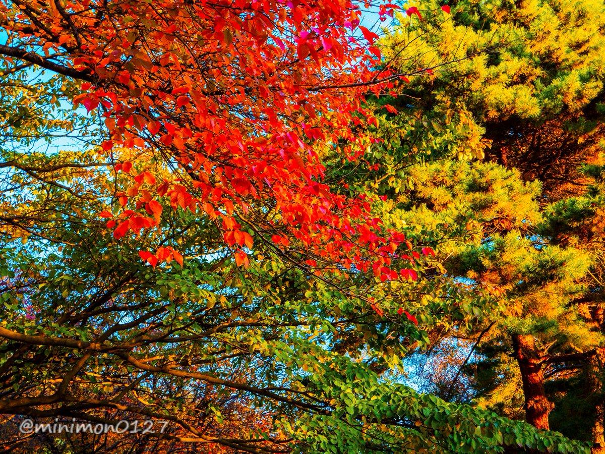 おはようございます。  #和光樹林公園 #ファインダー越しの私の世界  #キリトリセカイ  #photography  #OLYMPUS #m43 #MFT   OM-D E-M5 MkII LUMIX G X VARIO 12-35mm/F2.8 II https://t.co/wVckrGvIX8
