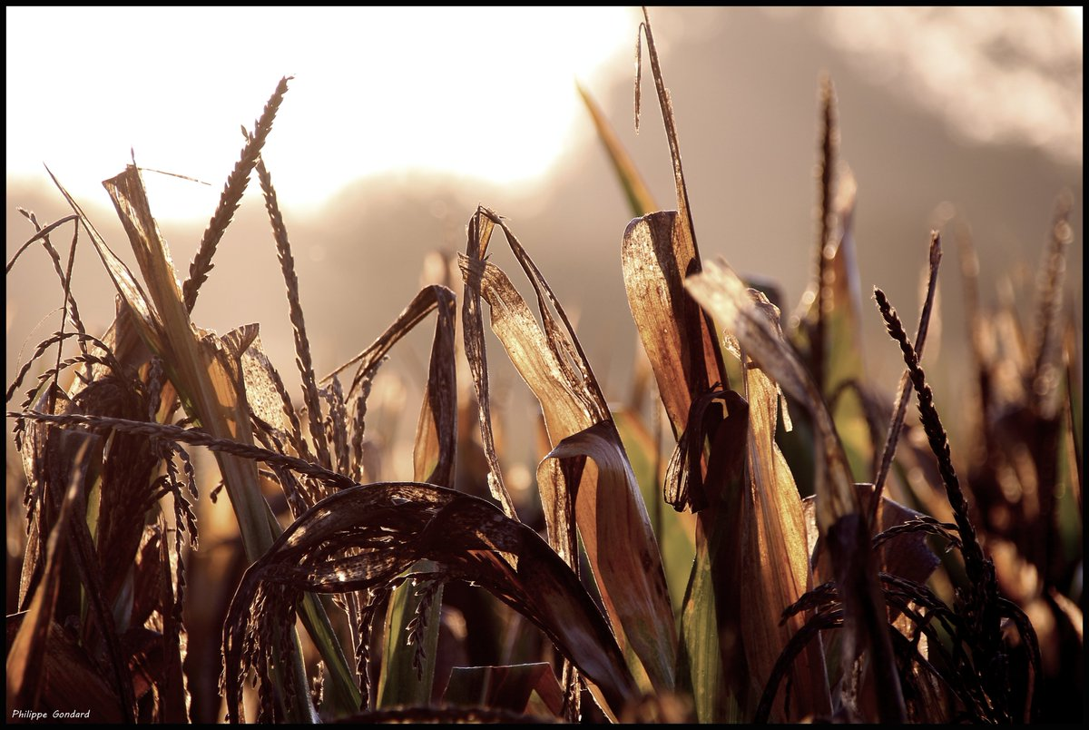 Laigné en Belin (Sarthe) #LaignéEnBelin #Sarthe #lasarthe #sarthetourisme #labellesarthe #labelsarthe #Maine #paysdelaloire #paysage #nature #campagne #rural #ruralité #gondard #route #road #OnTheRoadAgain #graphique #ombre #lumière