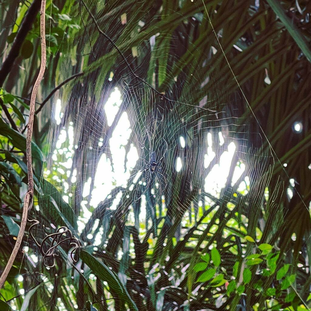 On the Real World Wide Web  #travel #singapore #mountfaber #nature #webstagram #spiderweb #rovinglight #shotoniphone #iPhone12promax #shotonhalide