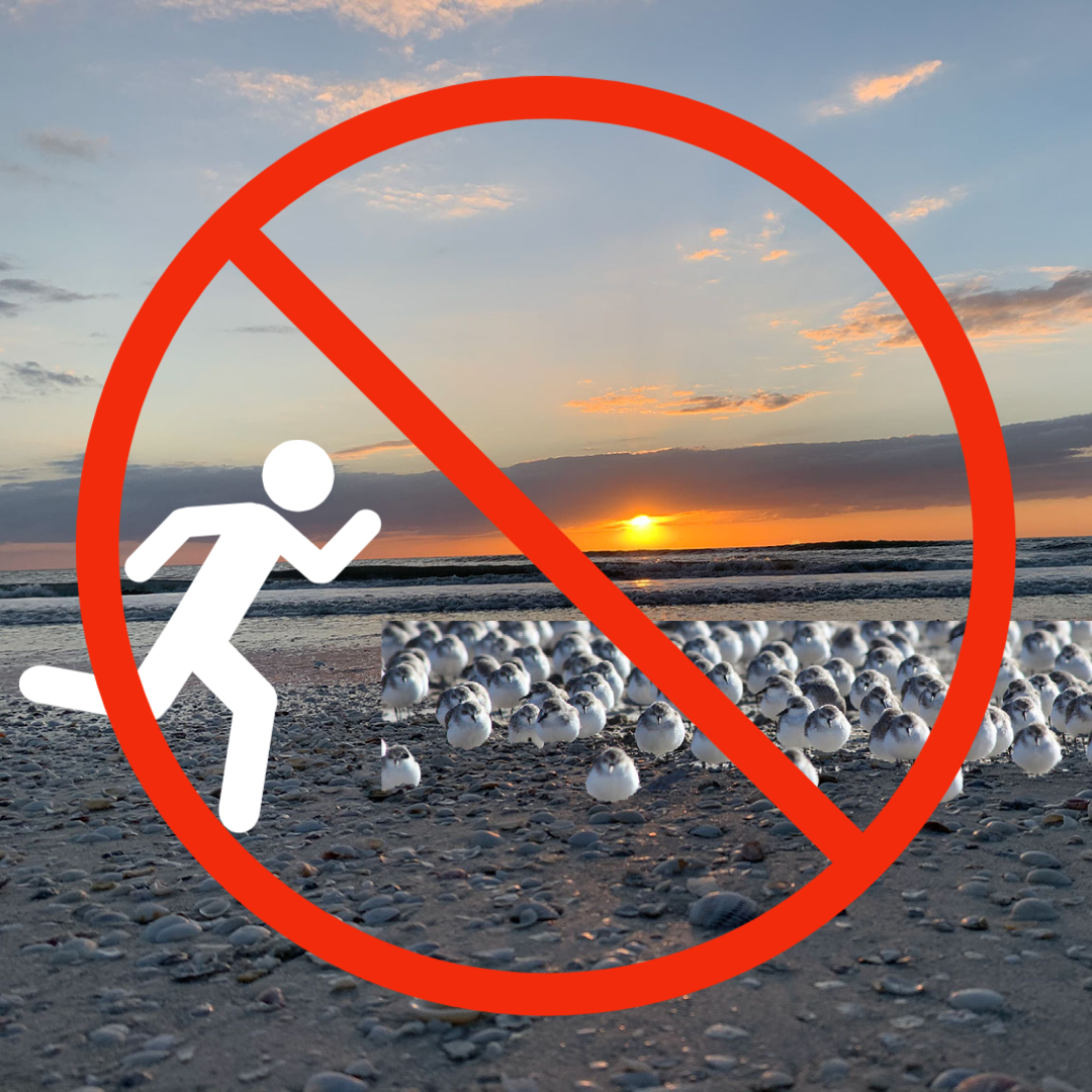 Do not flush the birds!  Disturbance may cause parent birds to abandon their nests. If birds become agitated, take flight or swoop at you, YOU ARE TOO CLOSE.    #MarcoIsland #MIPD #SWFL #BetterTogether #WeProtectParadise #Shore #Birds #Ocean #Beach #Water