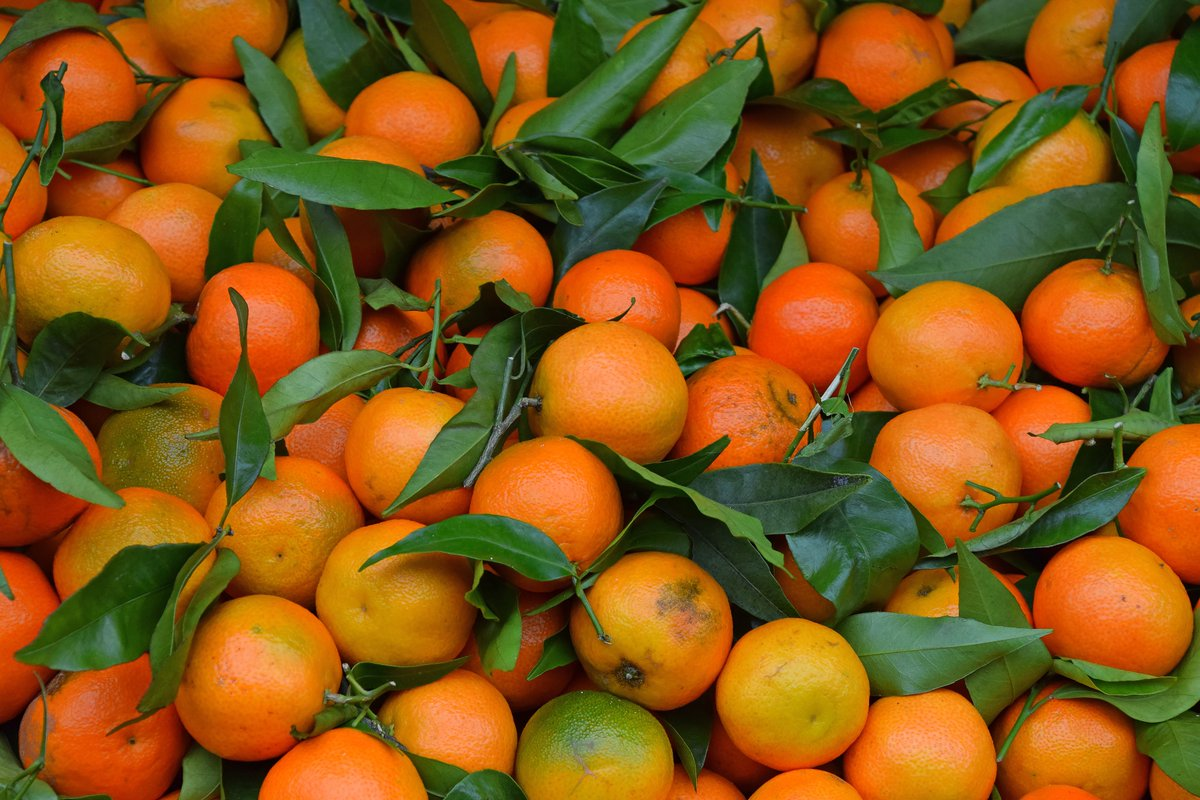 🍊Production of high quality #mandarins requires data-driven #SmartFarming solutions. #NIRS is here to help!  📃NEW BLOG POST:https://t.co/Kxd7WOSBlR --- #NIR #NIRS #AgTech #AgriBusiness #Citrus #PlantScience #Agriculture #Spectroscopy https://t.co/wIX3Tbq5A8