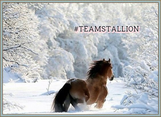 "Are U active? 💕 Boost yor Twitter audience fast ⏩⏩⏩ 👉 Turn on my notification 🔛 🔄 Drop Yor name & comment "" Stallion "" 🐎 Follow whoever ❤️ yor reply Quick 🎶💫😎 Share the Stallion Love ❤️  & Gain with 👇 👉 #TEAMSTALLION 🐎 #family !🐎@MarEthr 👉⚠️#stayathome  🤲😷↔️🙏"