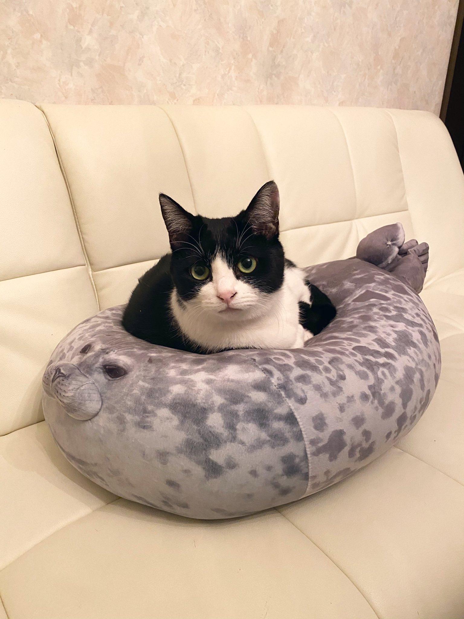 被貓咪坐到扁掉的海豹坐墊 Eoihe-9UcAYDilS?format=jpg&name=large