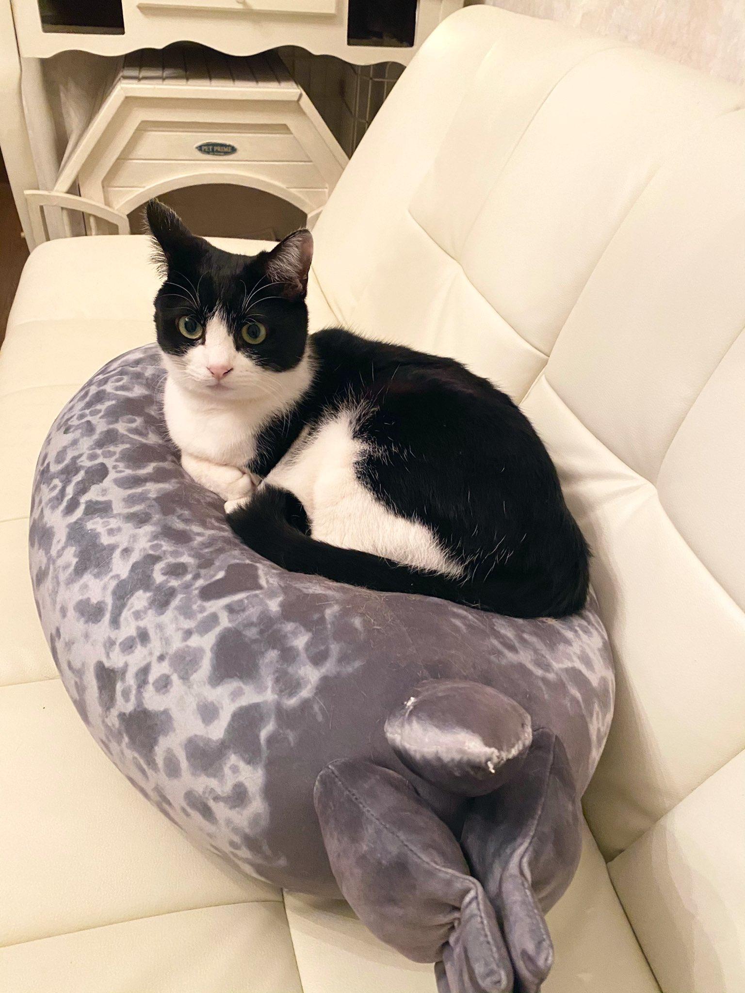 被貓咪坐到扁掉的海豹坐墊 Eoihe_CU0AINhCD?format=jpg&name=large