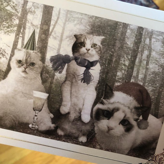 Taylor Swift's Cat Christmas Card