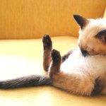 これは欲しい!お腹を枕にして眠る猫の作品が可愛すぎる!