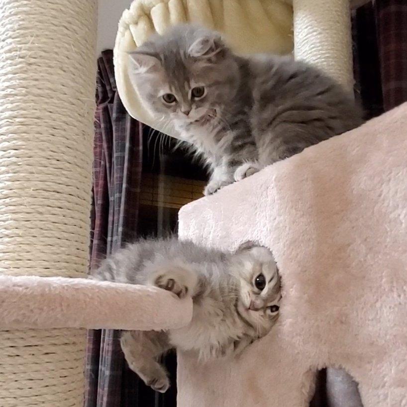 橫向和垂直時的貓咪 EozTDweUUAE7tEG