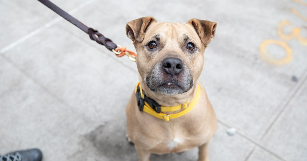 New Yorkers, I just received word from the ASPCA that this adorable senior girl, Foxie, is looking for a loving home for the holidays. She is available to adopt from the @ASPCA Adoption Center in NYC. More information here:  Have a healthy holiday.