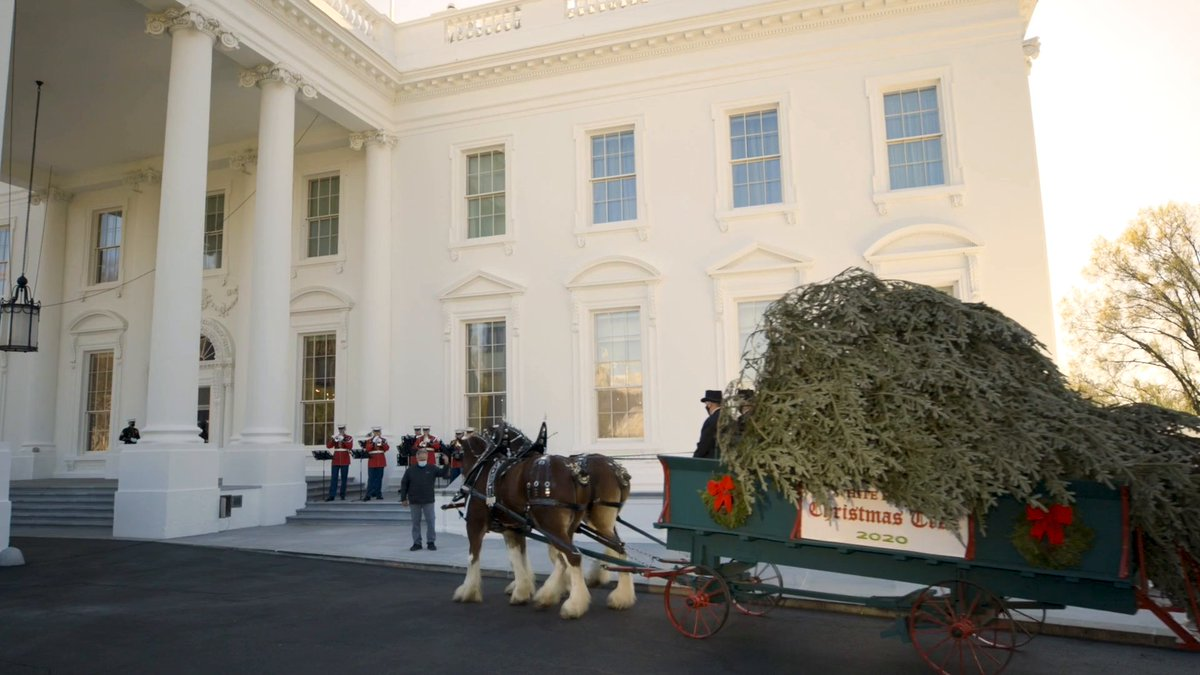 Replying to @WhiteHouse: 🎄 🎄 🎄