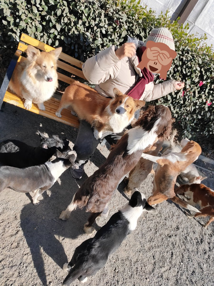 とてつもない天国?世界の名犬牧場は犬のキャバクラだったw