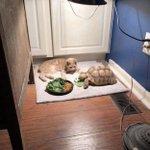 待ちくたびれた?カメさんの食事を待つうちに眠ってしまった猫w