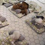 まるで保育園!ワンちゃんのお昼寝タイムの映像がかわいい
