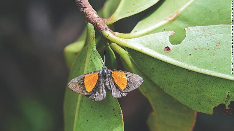 Scientists have announced the discovery of 20 new species in the Bolivian Andes, as well as sightings of plants and animals not seen for decades.
