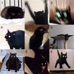 どのハイレベルな猫がお好みですか?好みの子を選んでください!