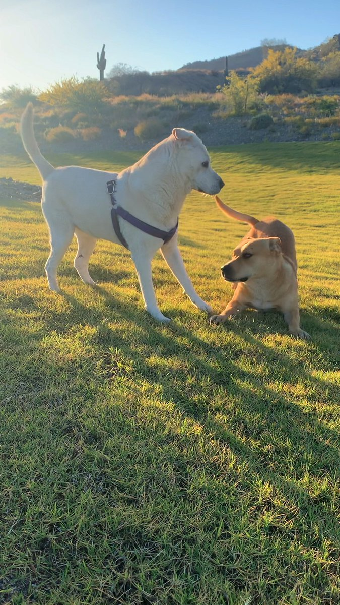 Stray dog wags his tail for the first time — when he meets a girl dog 💛
