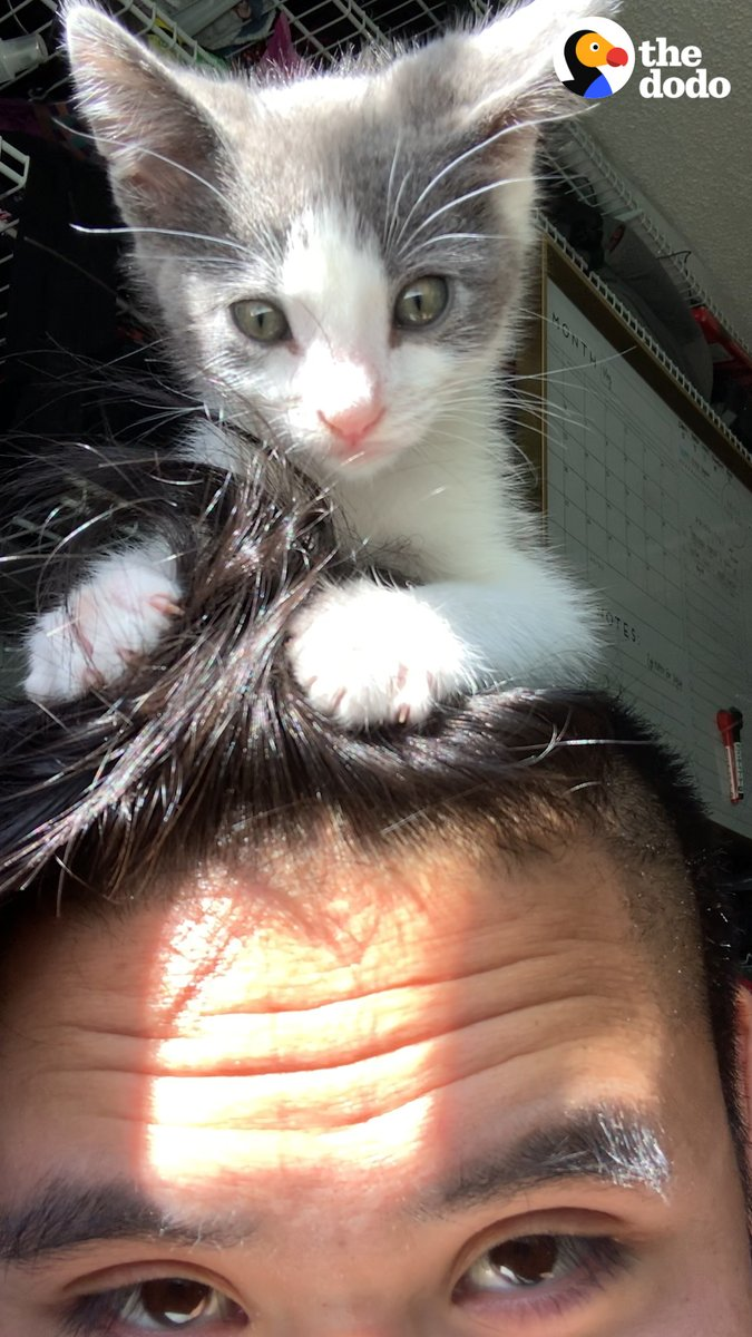 Tiny stray kitten follows guy home and becomes his gym buddy ❤️
