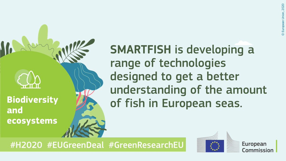 smartfishh2020 photo