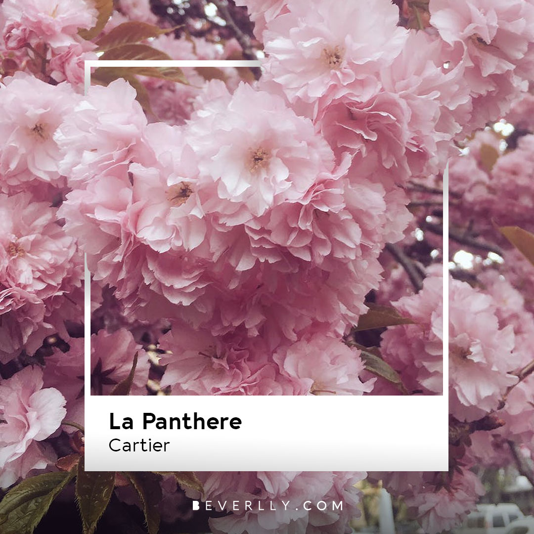 Through this visual resource, we made different #Pantones with the aim of communicating the essence of their fragrances and cross the senses of the audience, in this case, the sigh👇  Do you like it?😄