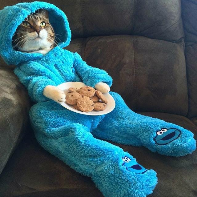 Replying to @JohnDonoghue64: As his humans set off for work, Rufus prepared himself for another hectic day at home...