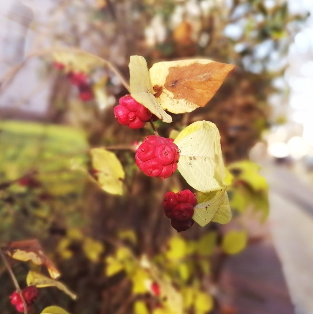 ☀️ Had a berry nice stroll in the Berlin sun, earlier today ☀️  #NaturePhotography #urbanexploration #berryboost https://t.co/9n0aZS8OCe