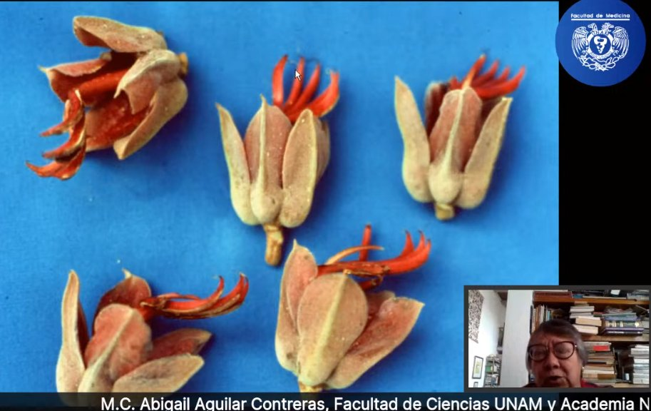 Una introducción a la Herbolaria mexicana por la Maestra Abigail Aguilar Contreras (UNAM)