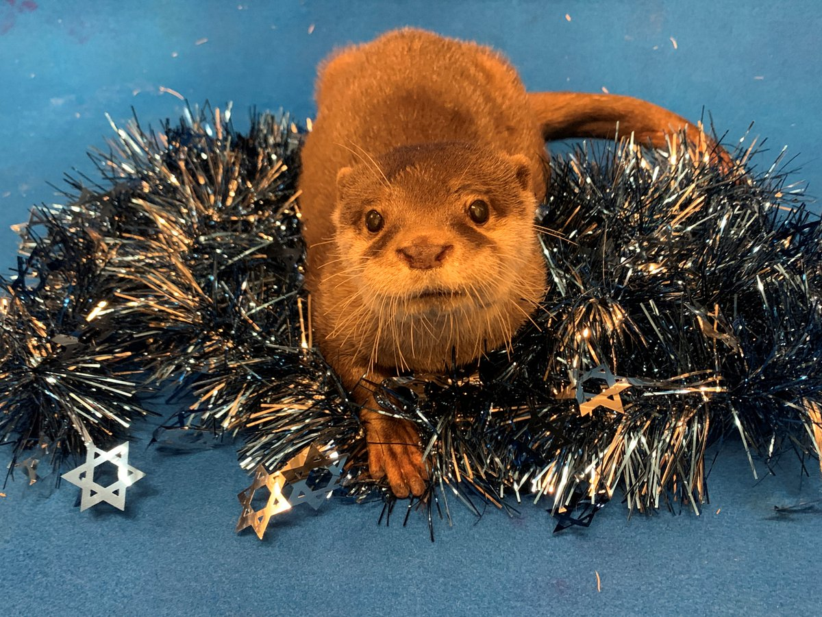 This time of year has us feeling festive!🦦
