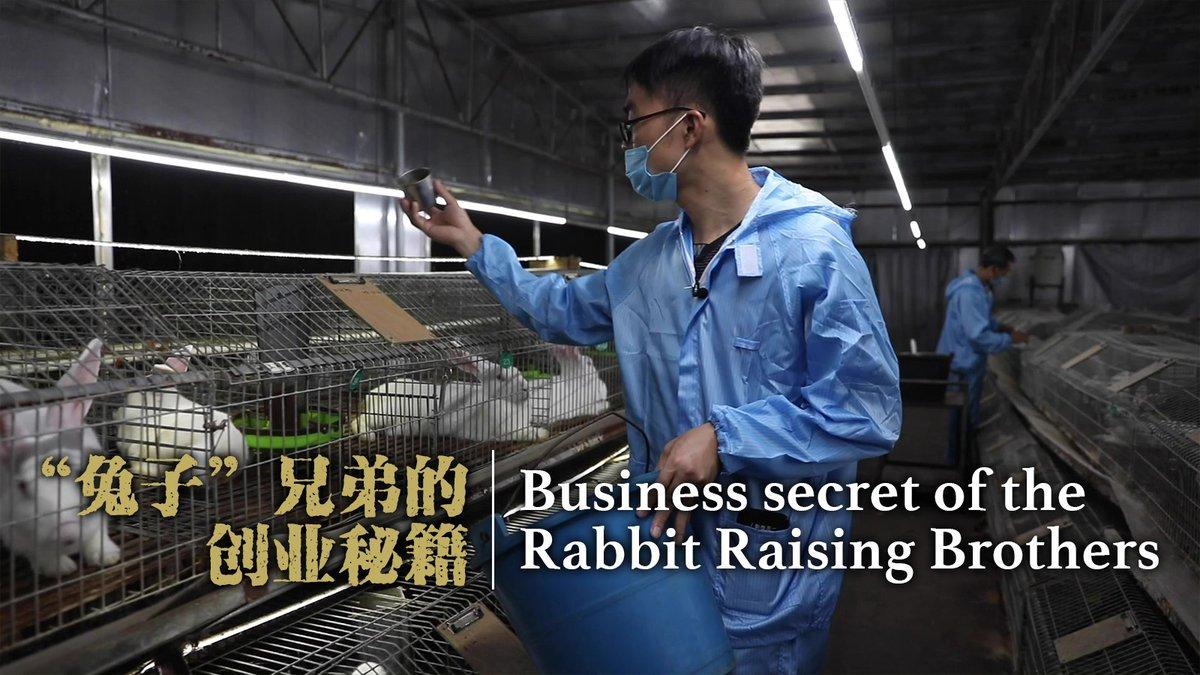 "The business secret of the ""rabbit raising brothers""丨1.4 Billion #ZeroPoverty2020  Full story:"
